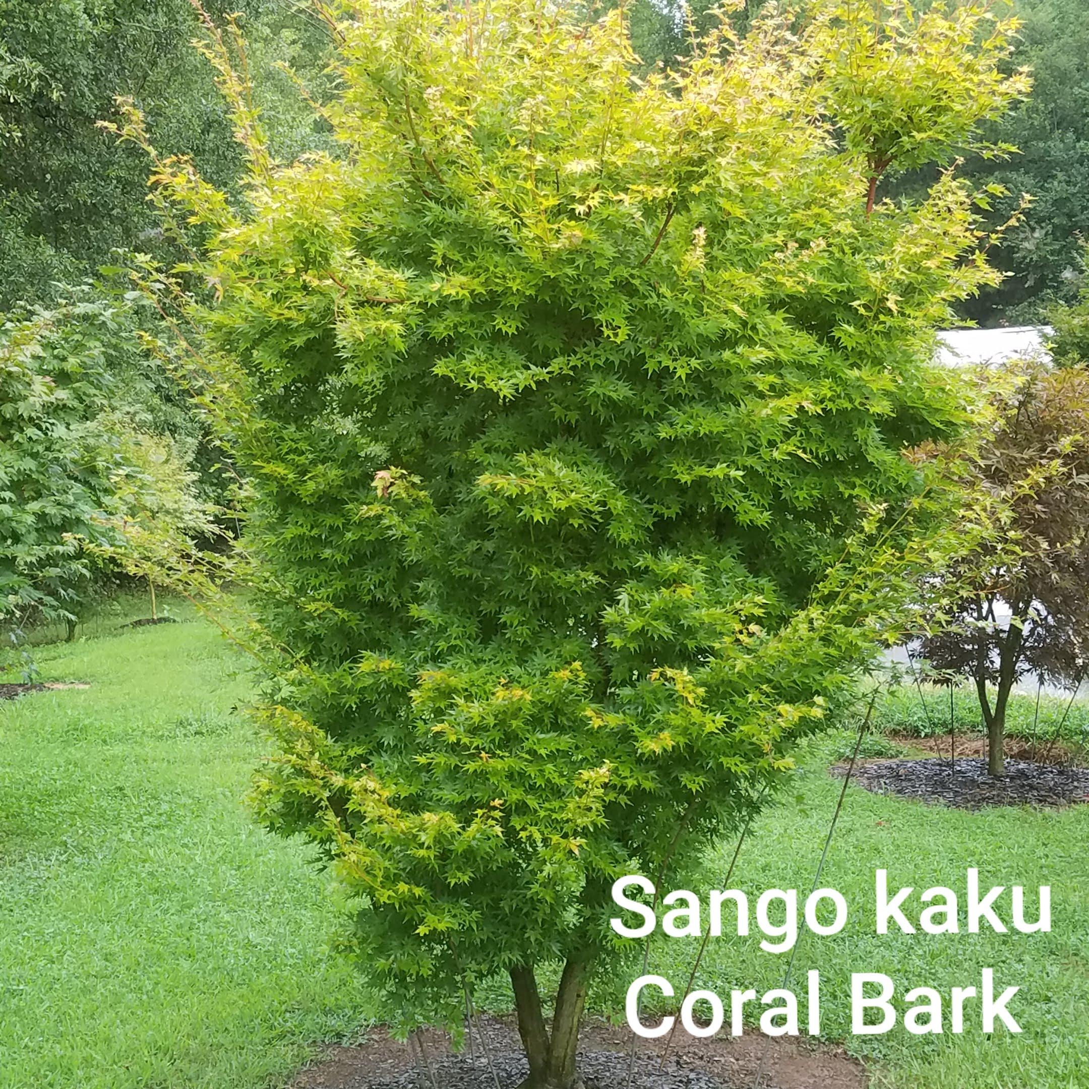 Sango Kaku Garden