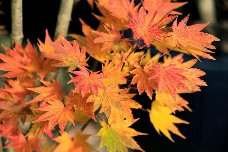 Jordan Fall color